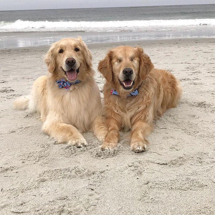 Ένας τυφλός σκύλος έχει για οδηγό μια σκυλίτσα που είναι πάντα δίπλα του – Πραγματικά υπέροχες εικόνες. - Εικόνα 3